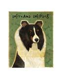 Shetland Sheepdog (Tri-Color)