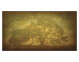 St Joe Plantation Oak in Fog 3