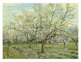 The White Orchard, 1888 Reproduction d'art par Vincent Van Gogh