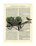Wheelbarrow Lettuce & Bird