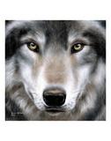 Grey Wolf Portrait Reproduction d'art par Sarah Stribbling