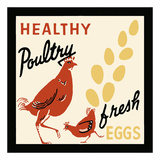 Healthy Poultry-Fresh Eggs
