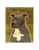 Gray Pit Bull