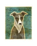 Italian Greyhound (White & Grey)