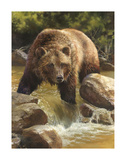 Grizzly at Roaring Creek