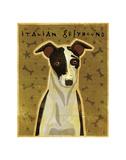 Italian Greyhound (Black & White)