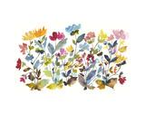 High Country Wildflowers N 2