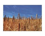 Hot Dog Reeds