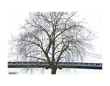 Manhattan Bridge Span with Tree