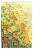 Marigolds for Carson