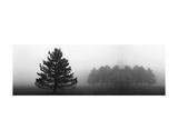 Misty Pines