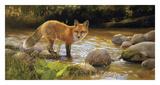 Morning at Honey Creek Reproduction d'art par Bonnie Marris