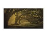 Oak Alley Morning Shadows