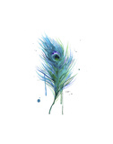 Peacock Feather Teal