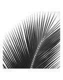 Palms 14 (detail)