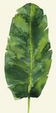 Tropical Palm Leaf III