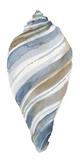 Coastal Seashells - Tulip