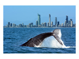 Humpback Whale at Gold Coast