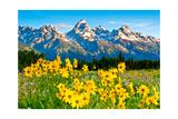 Teton Sunshine