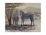 Zebras II