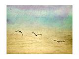 Seagulls in the Sky II