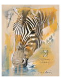 Wildlife Zebra