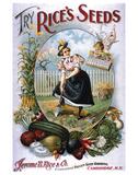 Try Rice's Seeds Cambridge