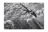 Japanese Garden  Infrared - Brooklyn Botanic Gardens  Tree