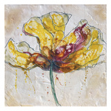 Yellow Poppy on White
