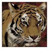 Tiger Streaks