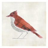 The Red Birdy