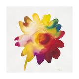 Rainbow Daisy 1