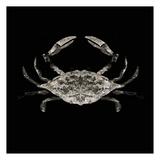 Coastal Crab 3