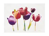 Rainbow Tulips 1