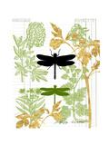 Garden Botanicals & Dragonflies