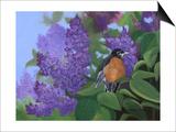 Lilacs Robin