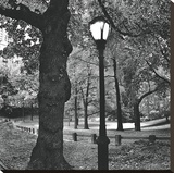 A Light in Central Park