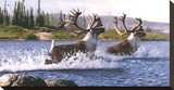 Caribou Crossing