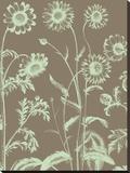 Chrysanthemum 12