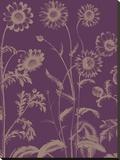 Chrysanthemum 13
