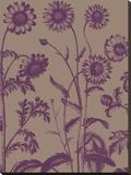 Chrysanthemum 14