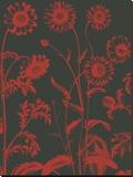 Chrysanthemum 10