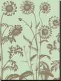 Chrysanthemum 11