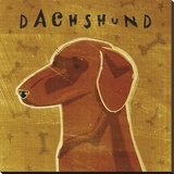 Dachshund (red) (square)