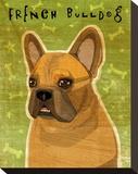 French Bulldog (Fawn)