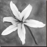 Lily (b/w)