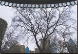 Park View II (color)