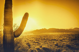 Epic Desert Sunset over Valley of the Sun  Phoenix  Scottsdale  Arizona with Saguaro Cactus in Fore