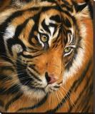 Tiger Face Portrait
