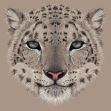 Illustrative Portrait of a Snow Leopard Irbis or Barys